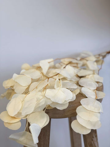 Dried & Preserved Flowers - Apple Leaves