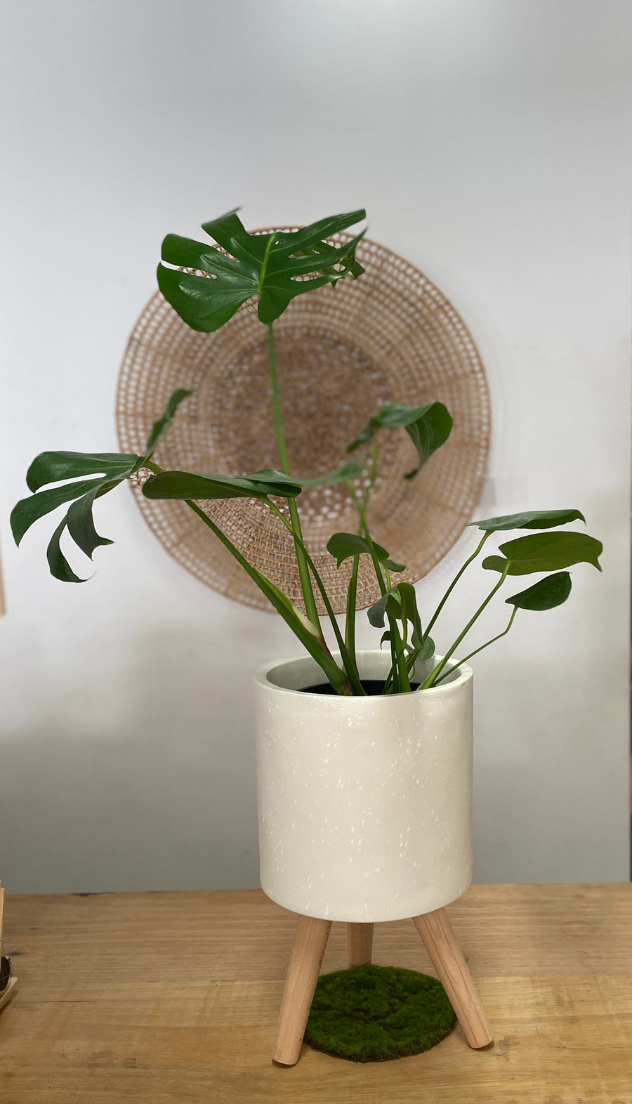 Monstera Deliciosa - Fruit Salad