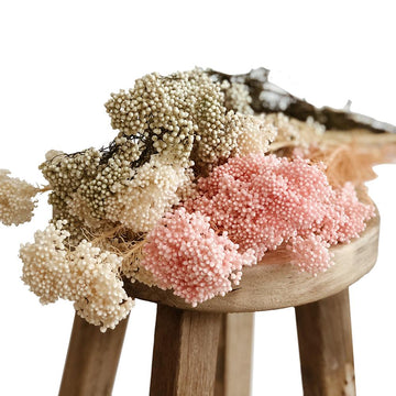 Dried & Preserved Flowers /  Rice Flower - Assorted