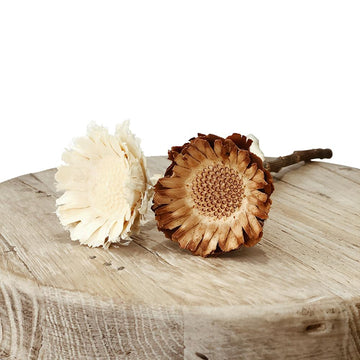 Dried & Preserved Flowers - Sunflower