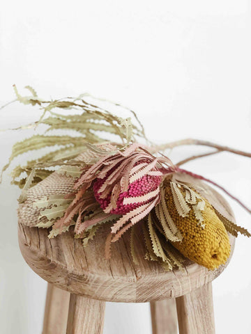 Dried & Preserved Flowers - Banksia Stem