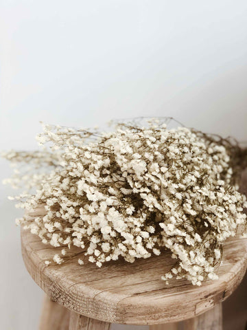 Dried & Preserved Flowers - Babys Breath