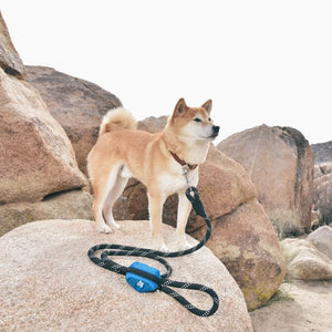 Adventure Leash Bag, Black