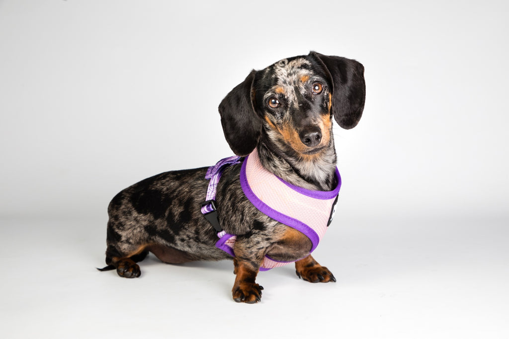 'Purple Infinity' Reversible Harness