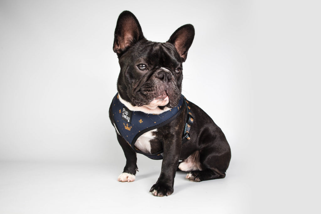 'Royalty' Reversible Harness