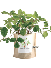 Garden-in-a-bag Alpine Strawberry