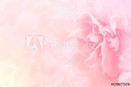 Pink carnation flowers bouquet with soft filter