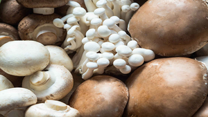 MUSHROOMS = ANTIOXIDANTS