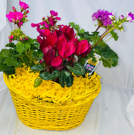 Oregano & Rosemary Garden Basket