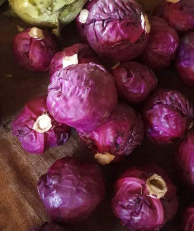 Cabbage Purple 500g