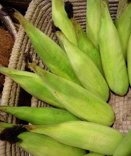 Sweet Corn / Cholam 500g