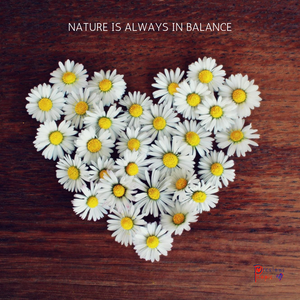 Spring -  Group Meditation Playlist August 2019