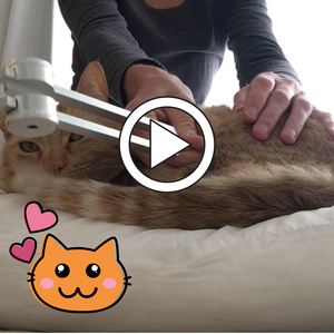 Puss Cat loves his tuning fork massage