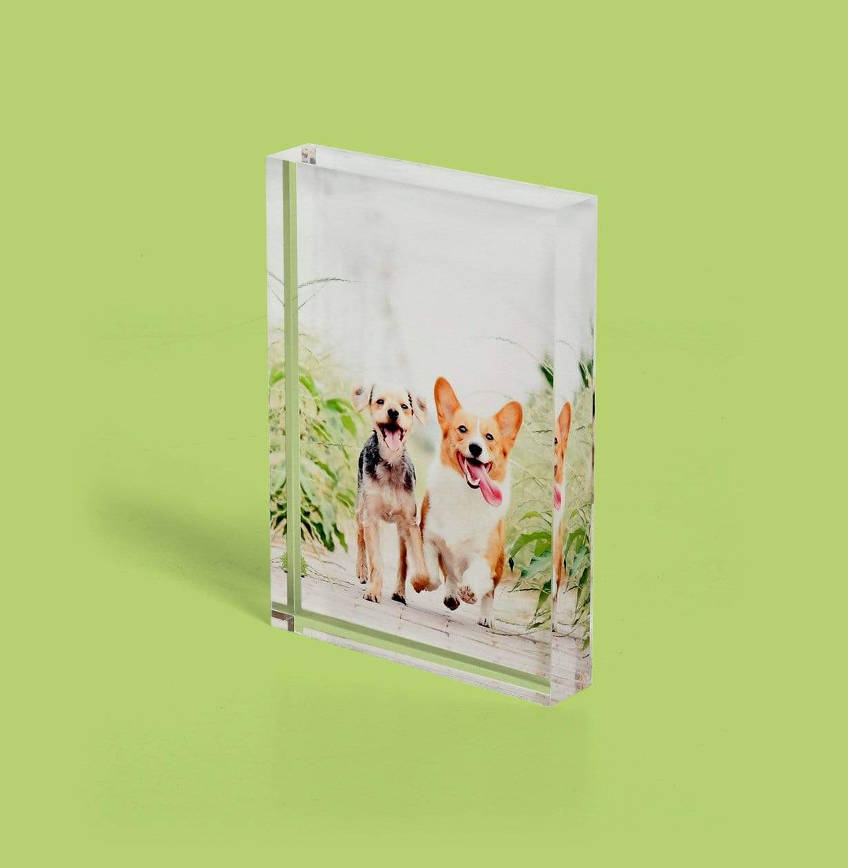 Pet Photo Printed on Acrylic Block - Desk Decor by Posterjack Canada