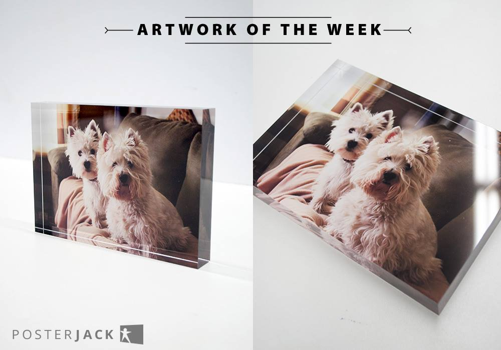 Pet Photo Printed on an Acrylic Block by Posterjack