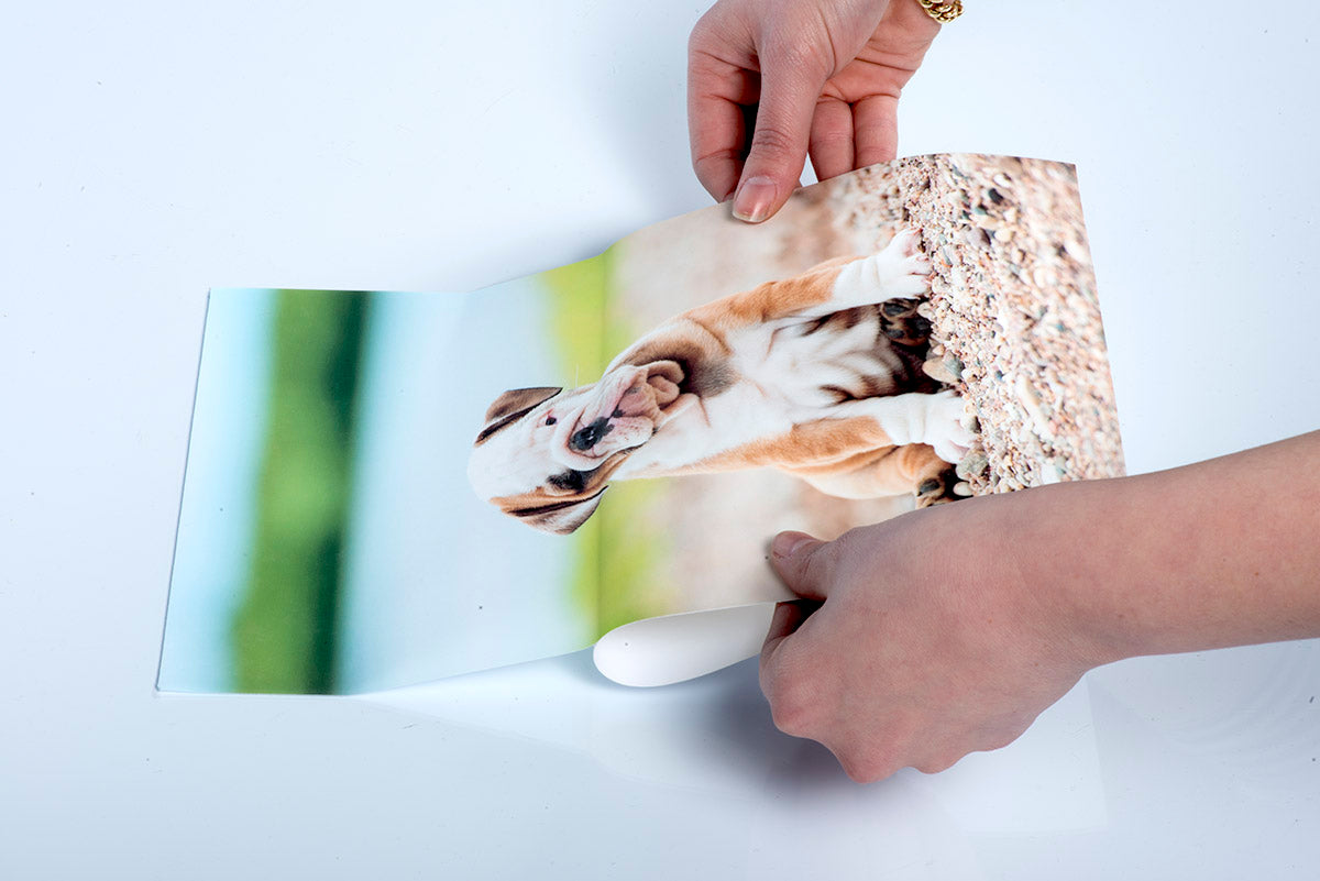 Photo of a Dog Printed on a Custom Peel & Stick Wall Decal by Posterjack
