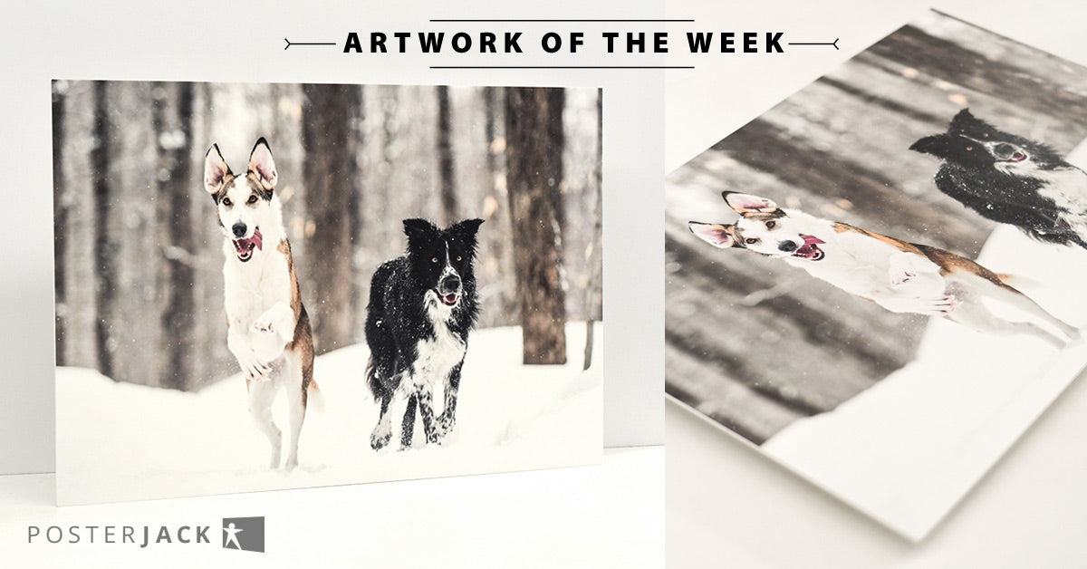 Custom Pet Print of Dogs Running Outdoors in Snow