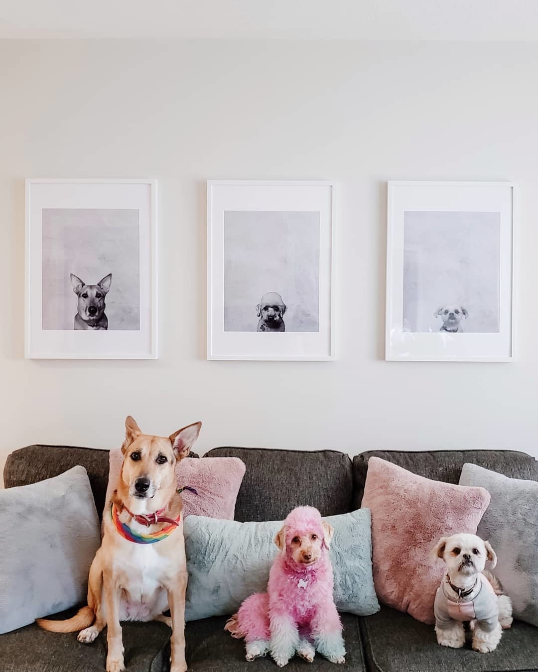 Portrait Photos of Dogs in White Picture Frames