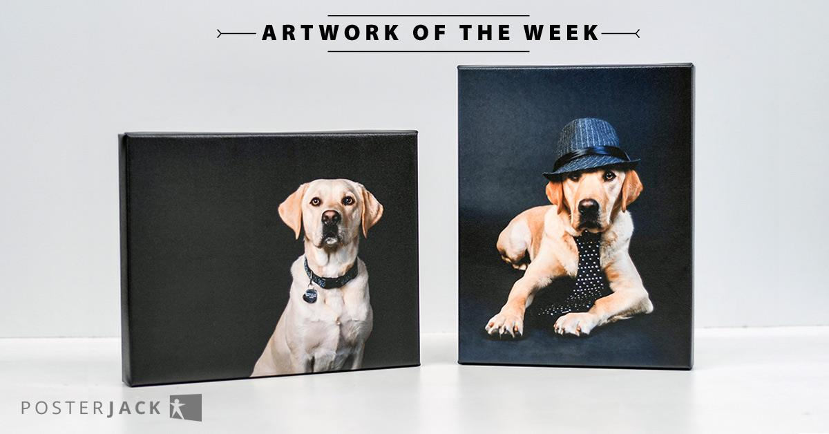 Canvas Prints of Assistant Dogs Dressed Up