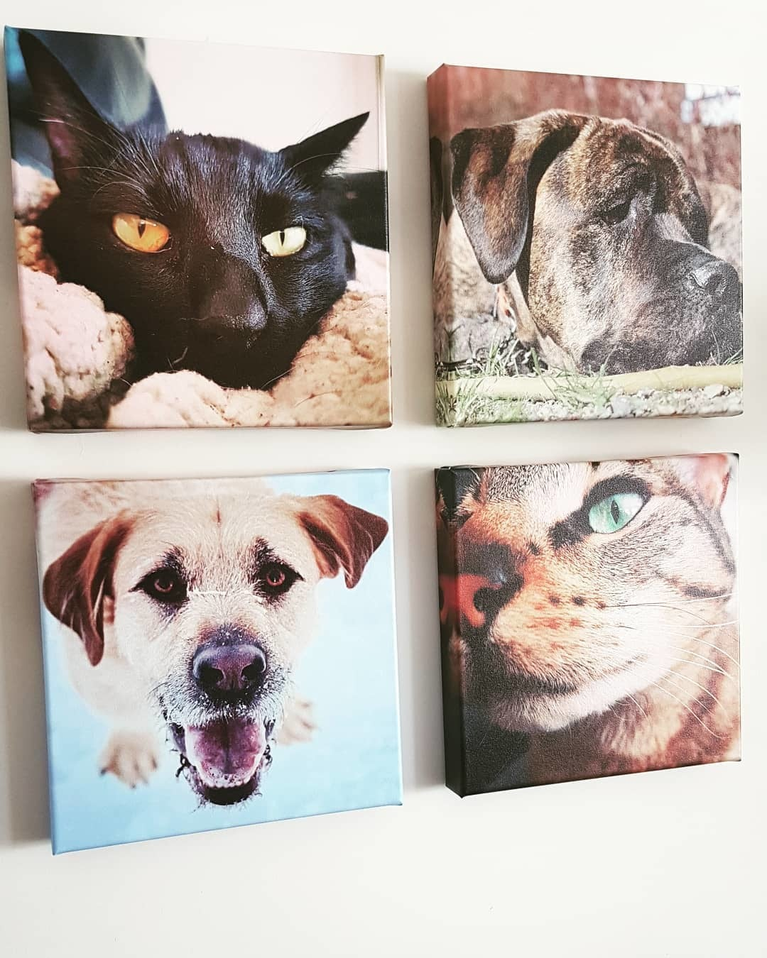 Gallery Wall of Canvas Prints of Pets