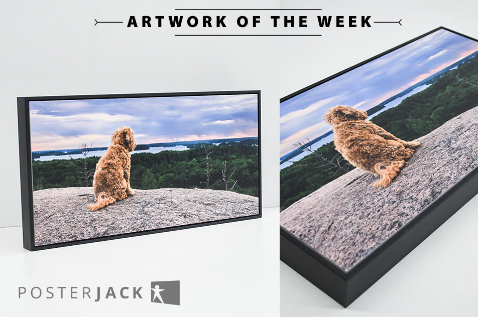 Outdoor Dog Photo Printed on Posterjack Gallery Box