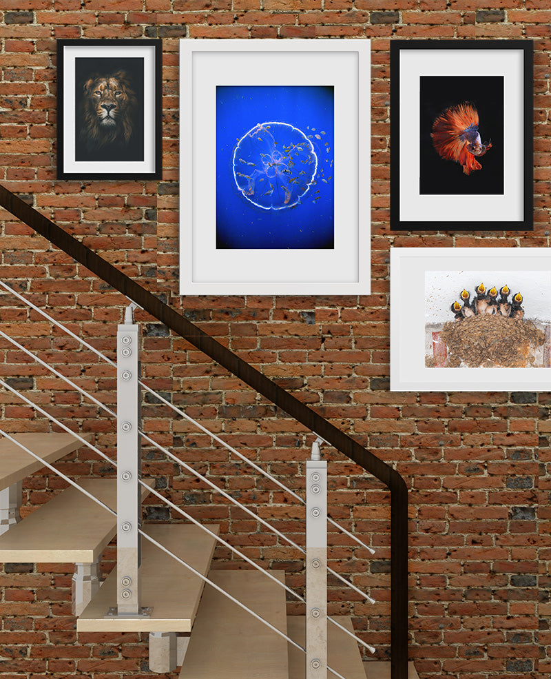 Ideas for arranging pictures in a stairway with various photo frames