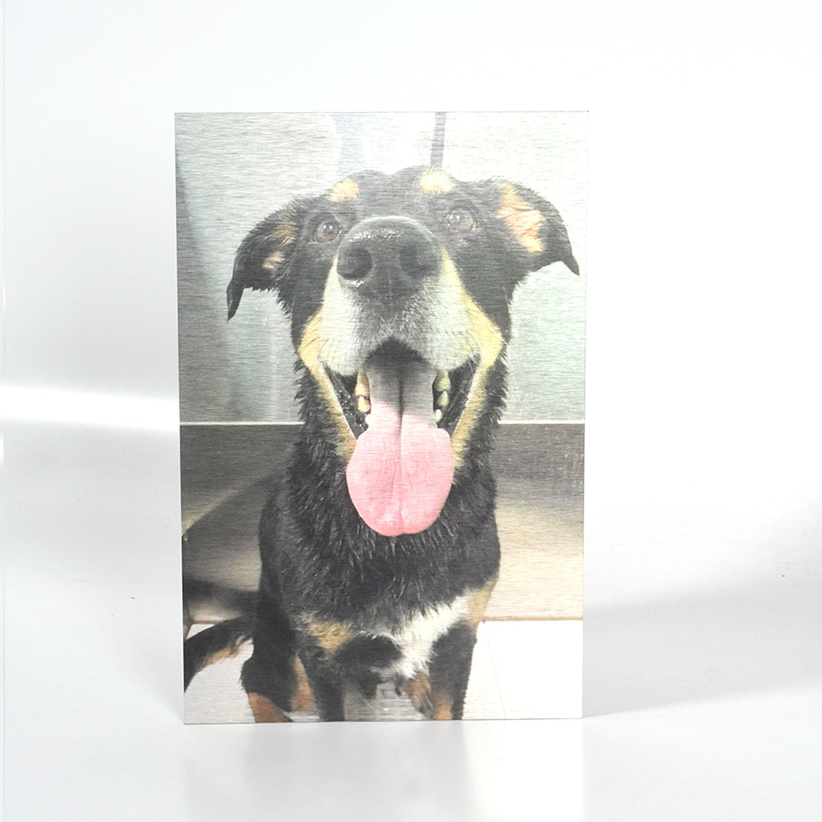 Dog Portrait Photo Printed on Brushed Silver Metal
