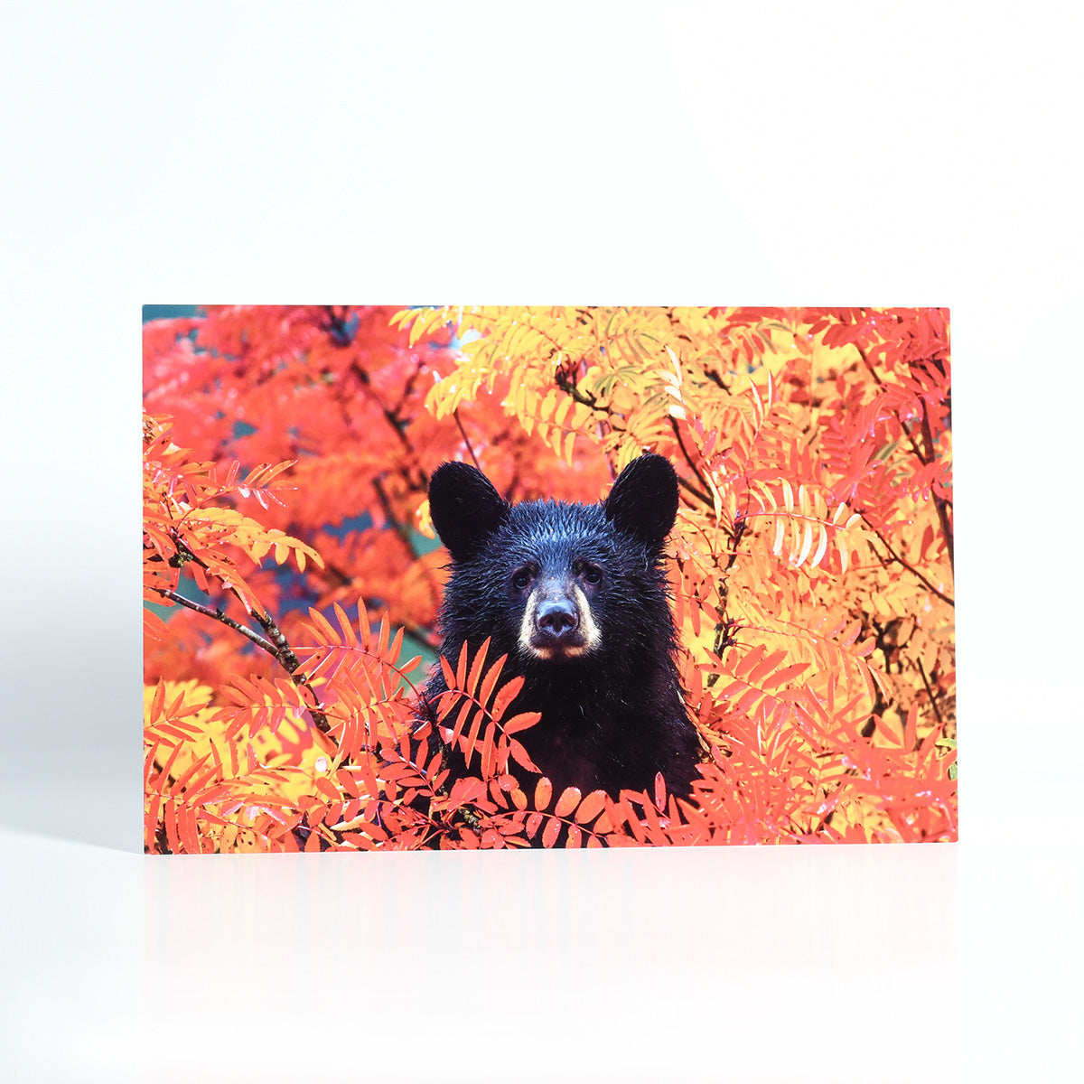 Stunning Photo of a Bear Cub in Autumn Leaves Printed on Metal