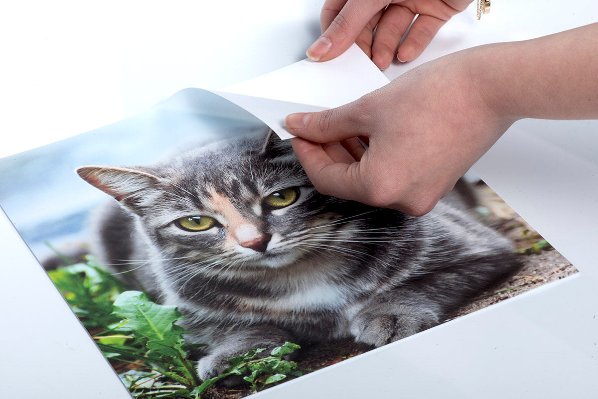 Personalized Peel & Stick Wall Decal - Photo of a Cat