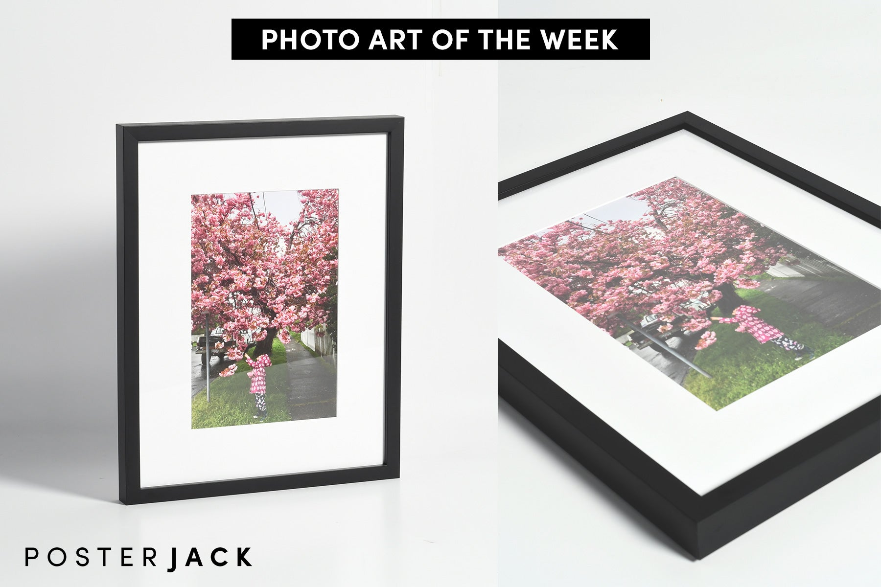 Posterjack Framed Print Photo of Little Girl and Cherry Tree Blossoms in Victoria, BC, Canada