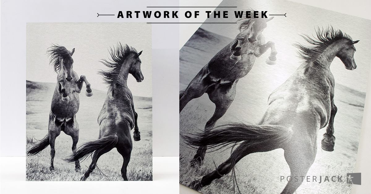 Photo of Horses Printed on Metal