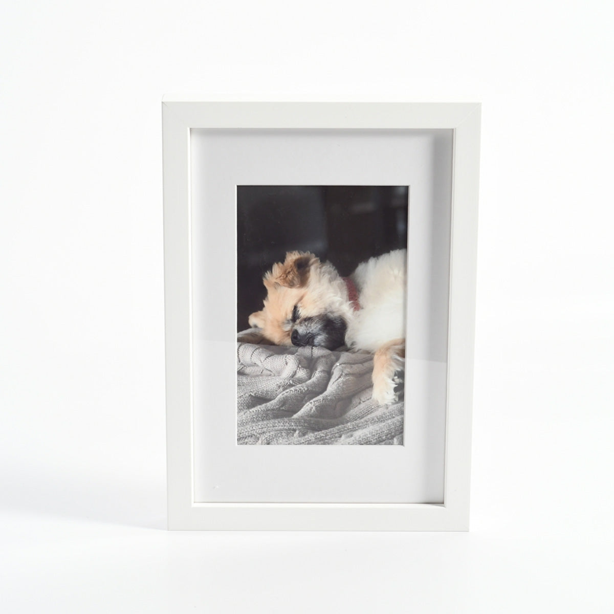 Photo of a Sleeping Dog in a Custom Framed Print