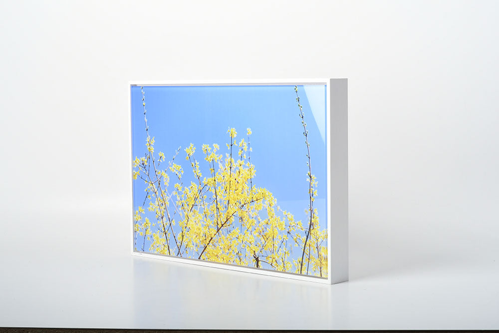 White Float Frame with Acrylic Print by Posterjack Canada