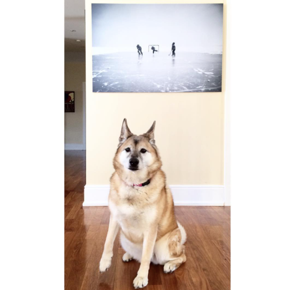 Dog-approved and designer-approve Posterjack photo art of winter ice hockey scene