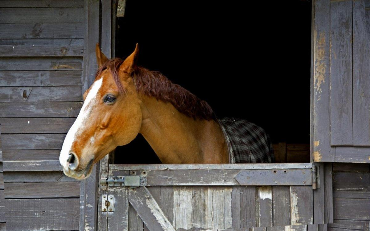 A horse looking over a barn door - example of the rule of thirds in photography