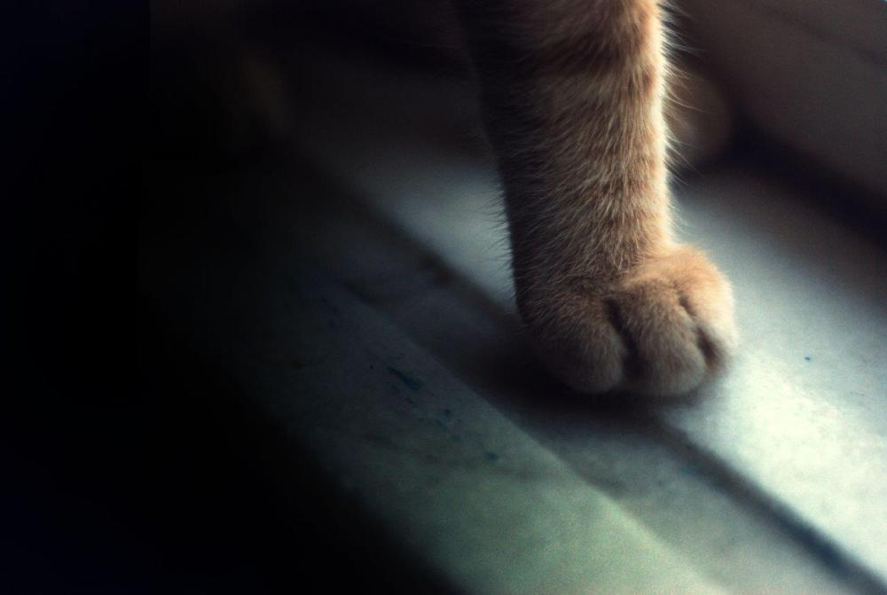 Picture of a cat's paw in natural light and composed to follow the rule of thirds in photography