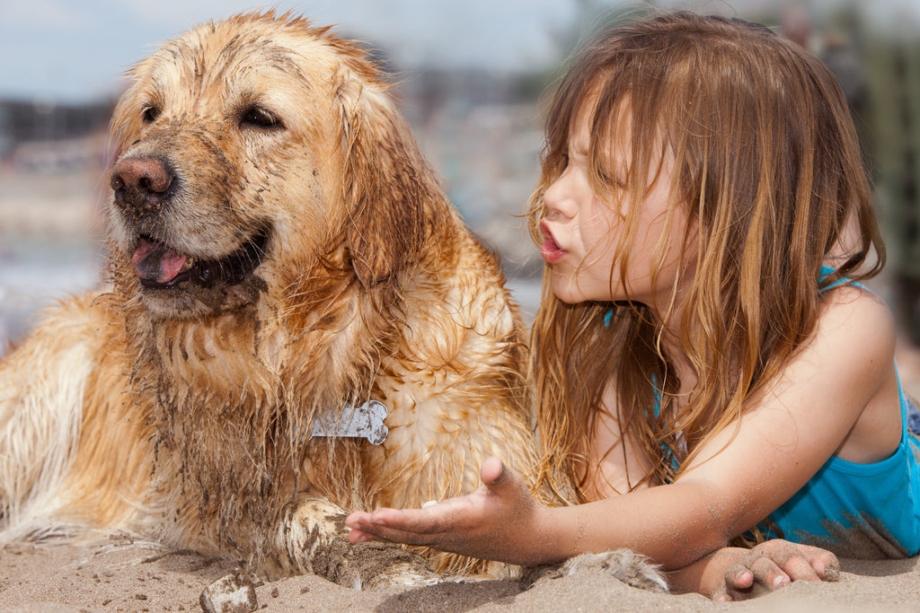 Little girl on the beach talking to her dog that is covered in sand