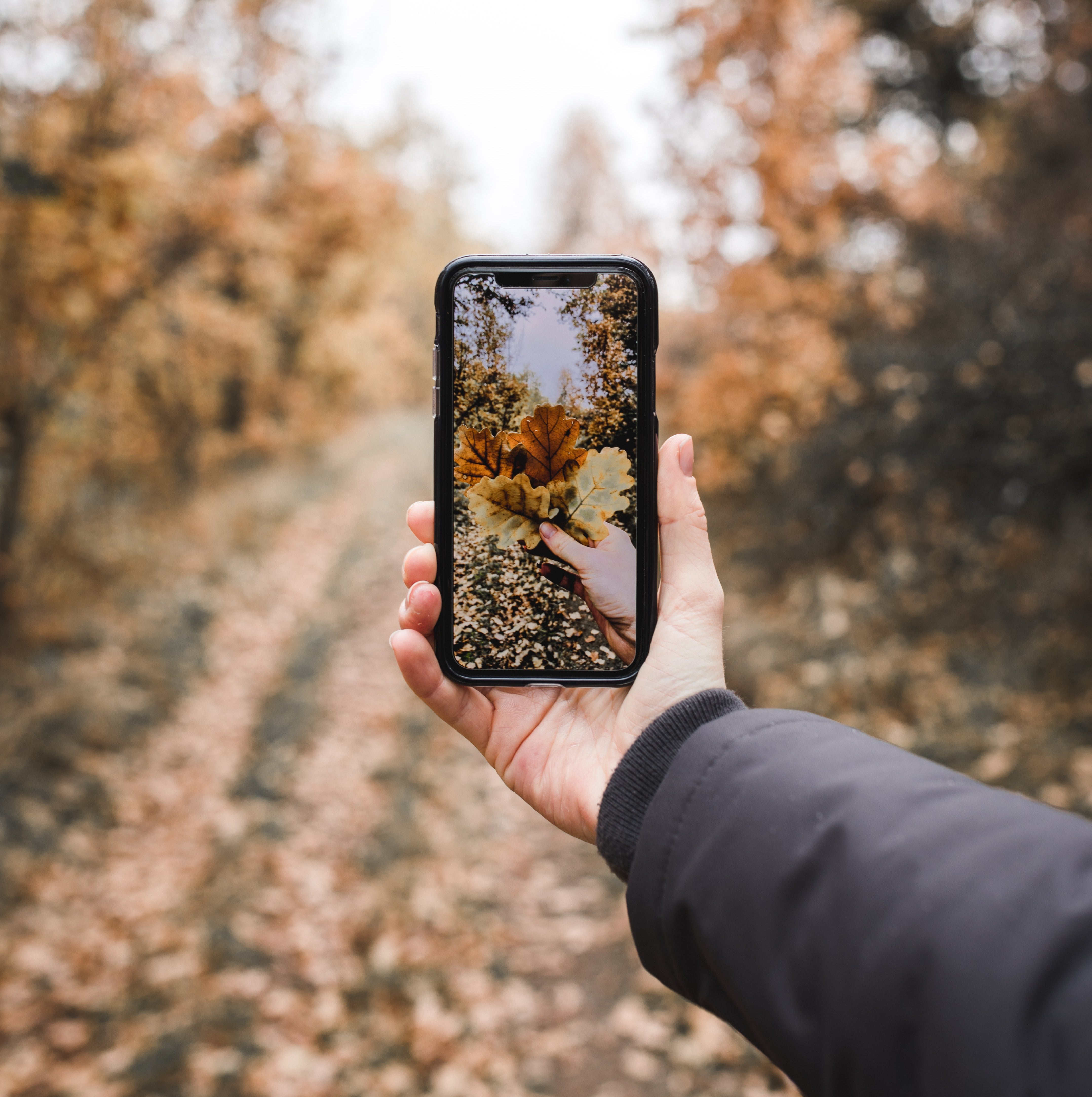 Autumn Photo Ideas - Person Holding Smartphone Capturing a Fall Picture