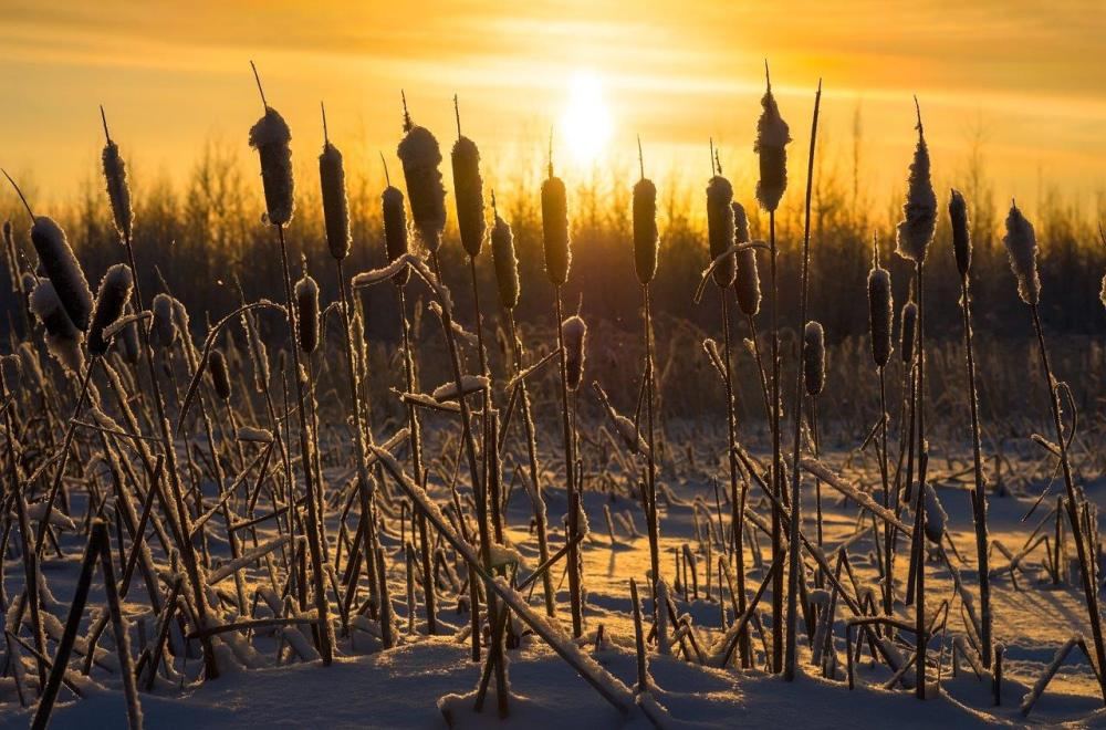 Bullrushes at sunset - example of leading lines in photography