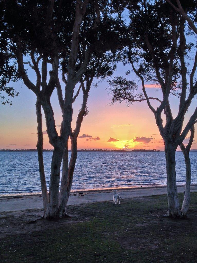 Trees on a beach framing a dog and the sunset