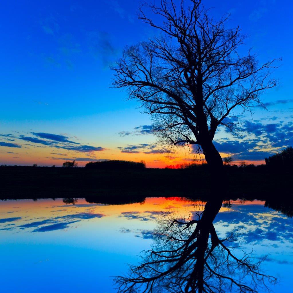 Silhouette of an old tree at night with reflections on water with vibrant colours