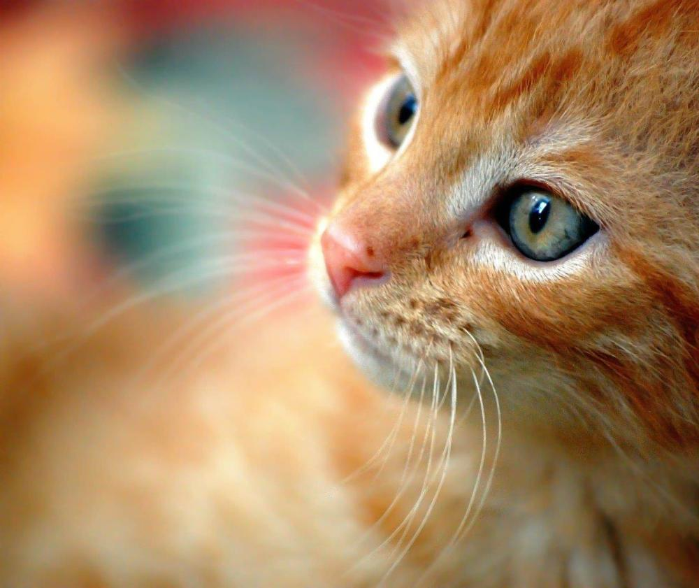 Close-up photo of an orange cat with a shallow depth of field