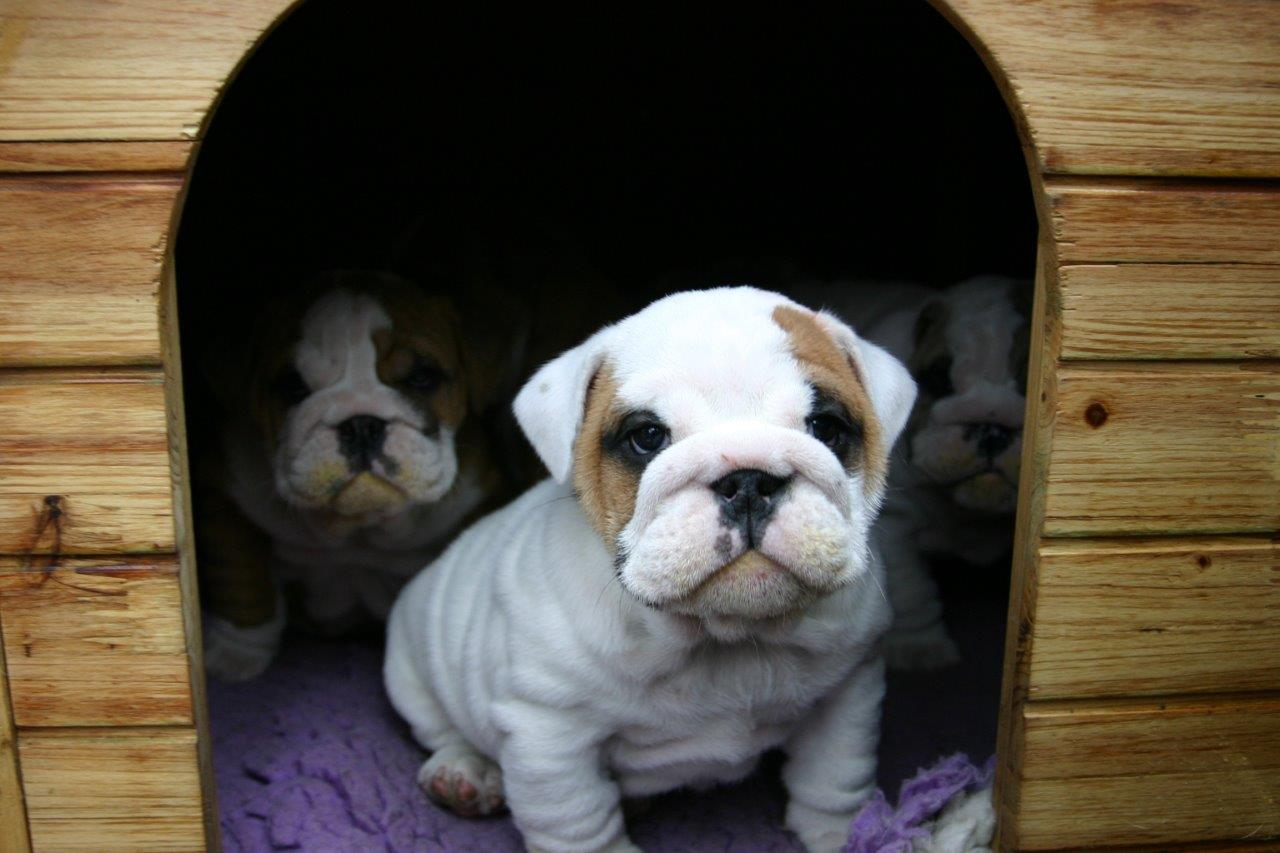 Puppies in a wooden doghouse as an example of compositional framing