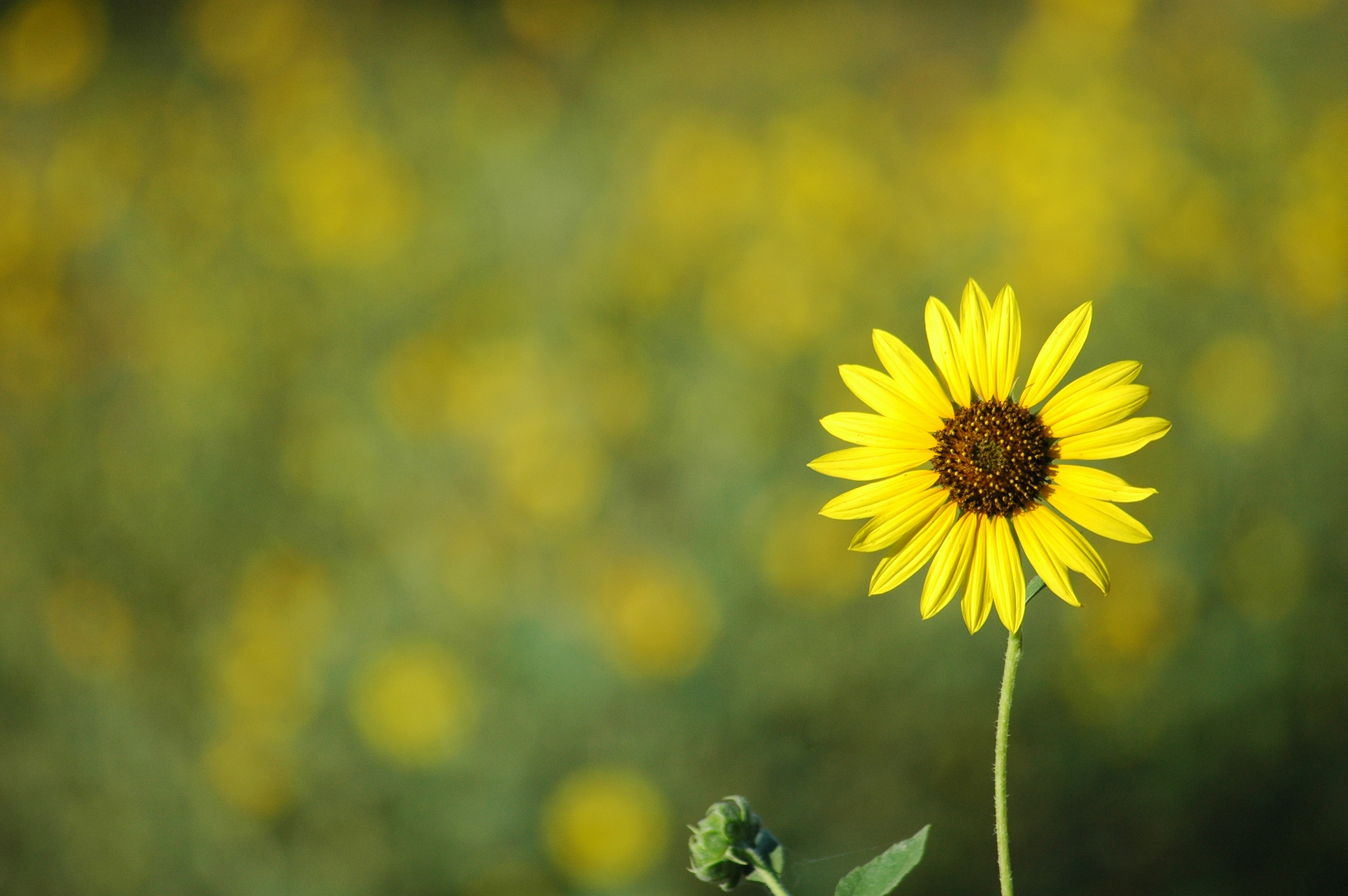 Yellow flower with a shallow depth of field