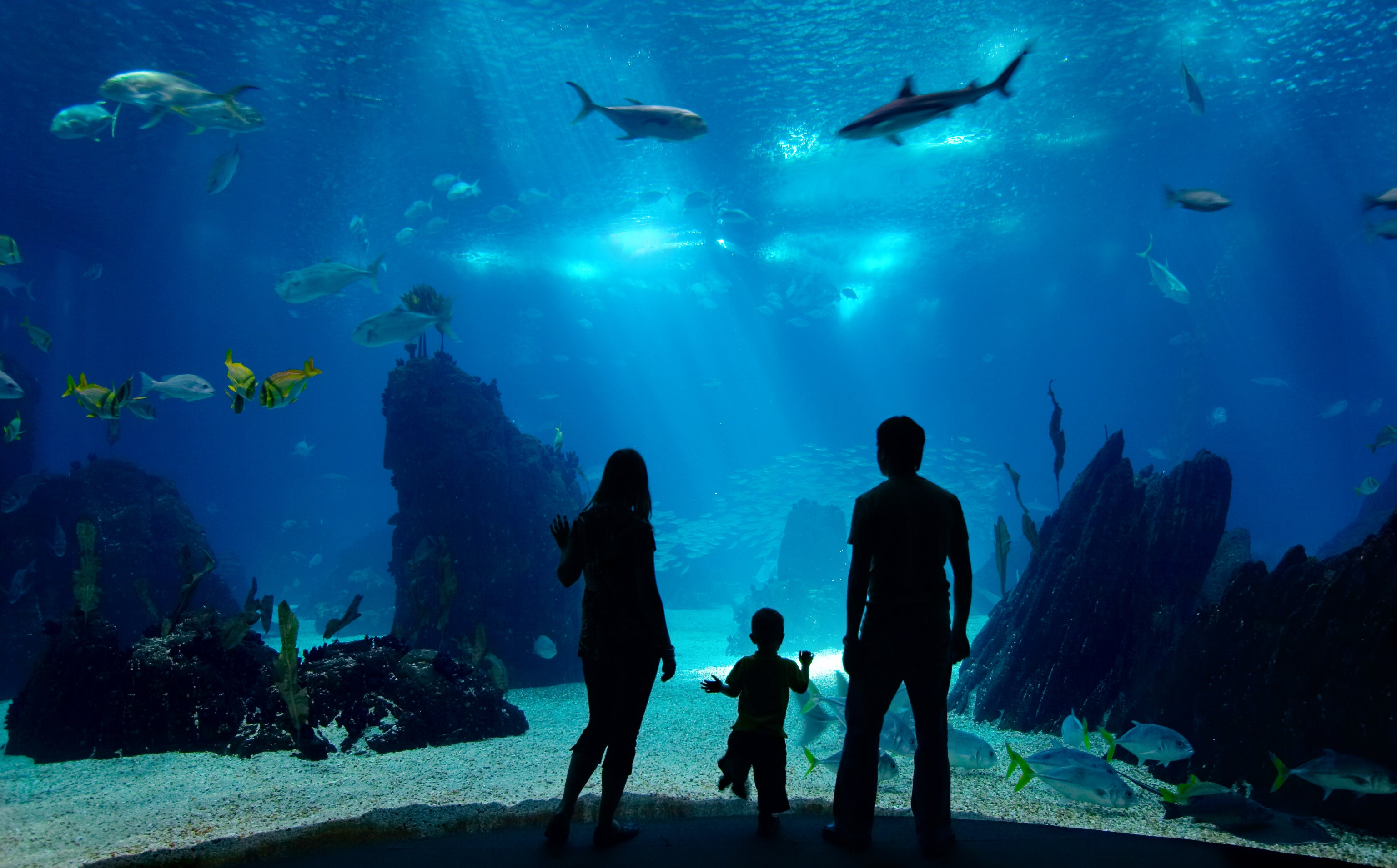 Family of three silhouettes looking through the glass of an aquarium