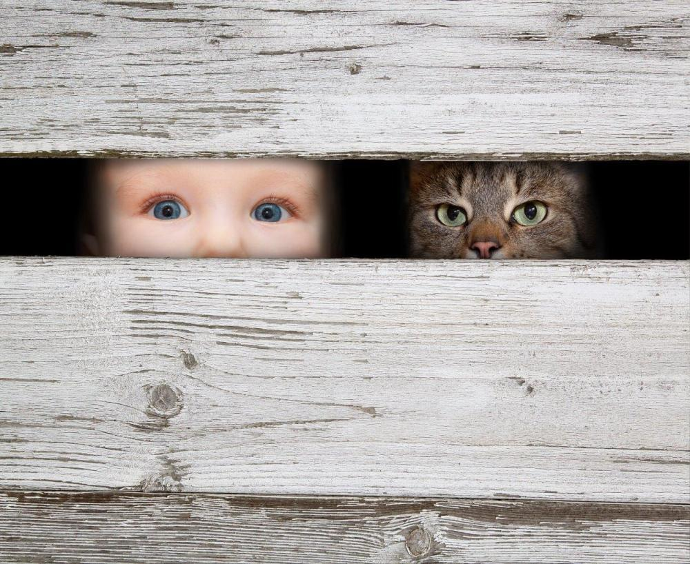 Toddler and Cat Looking Through Fence