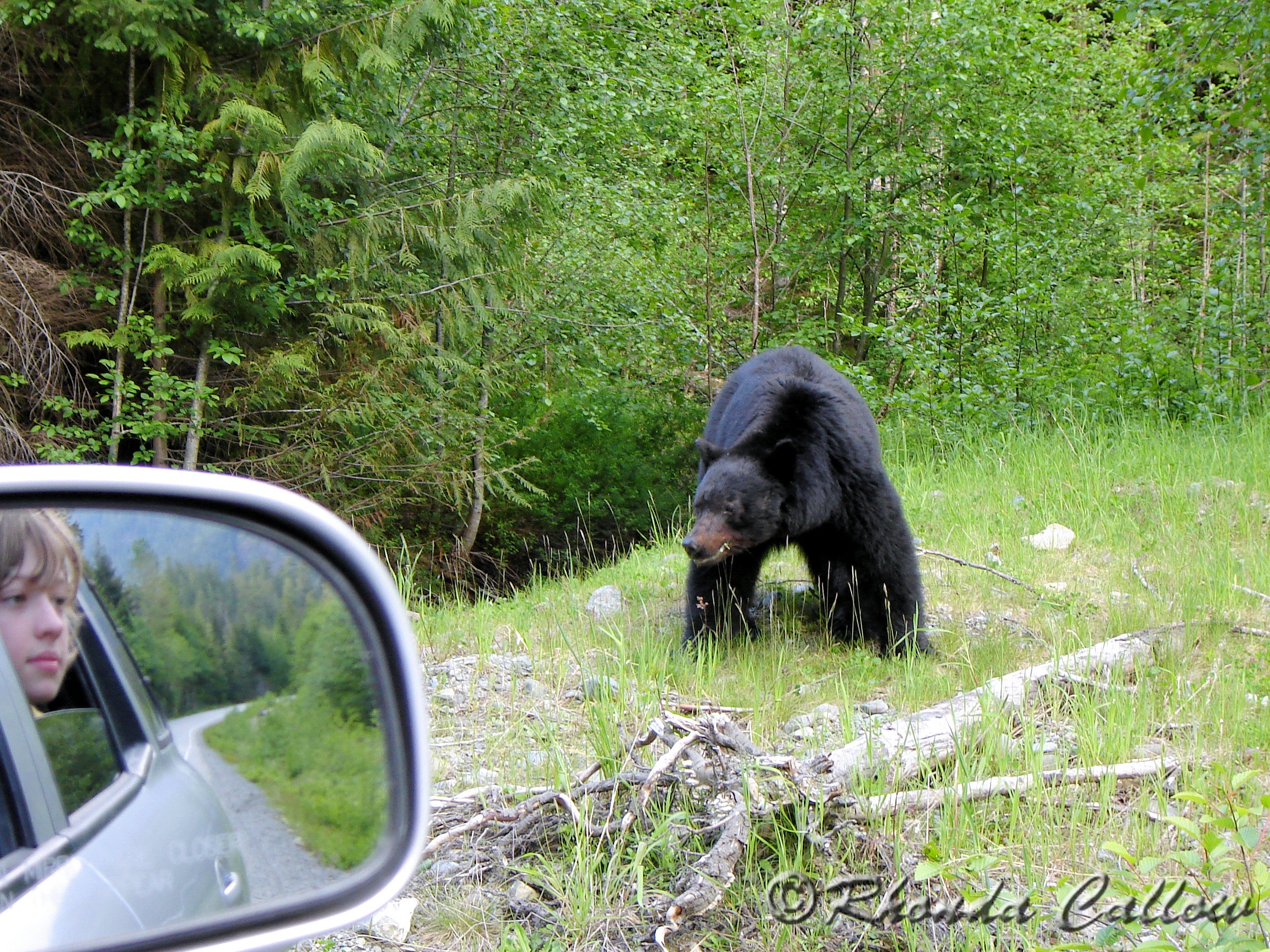 Boy looking at a black bear from the safety of the vehicle