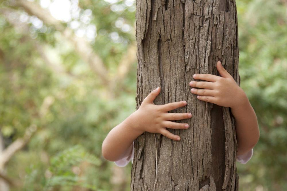 Young child hugging a tree in the forest - example of vertical leading lines in photoggraphy