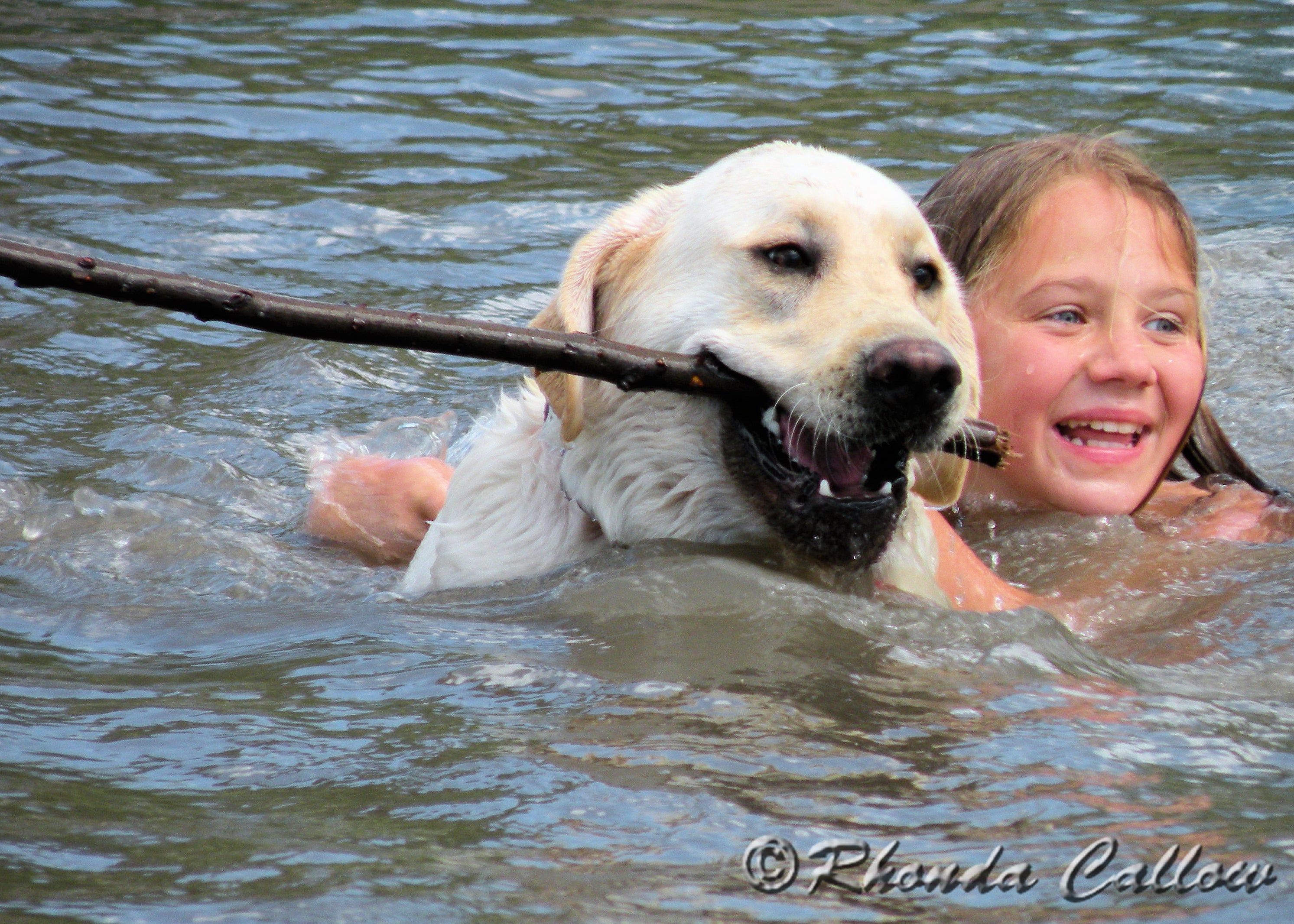Happy yellow Labrador and girl swimming in a lake in BC, Canada