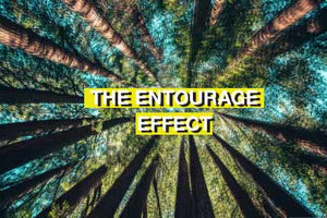 What is the Entourage Effect with CBD?
